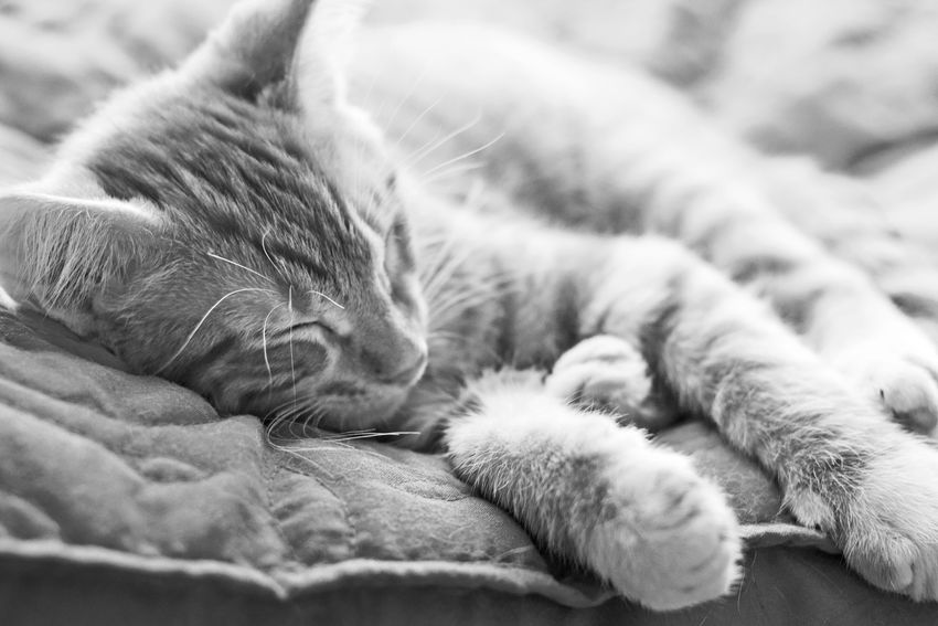 What I Value Portrait Cat Pets Blackandwhite Animals Nap Time Naturallight Eye4photography  Animal_collection