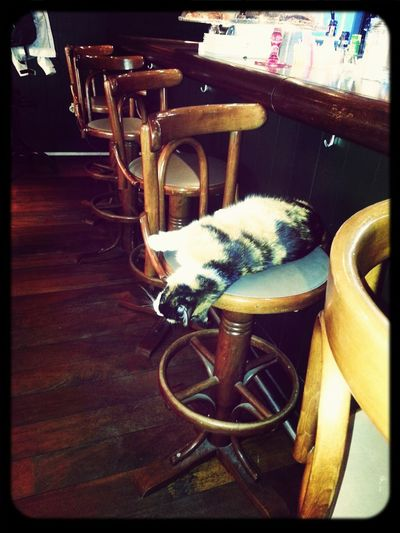 Sıcaktan bayılan kedi :D
