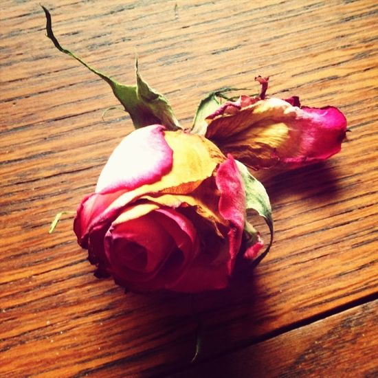 So sad.. My celebration roses are beginning to wilt, droop and this poor lil one dropped! Sob..