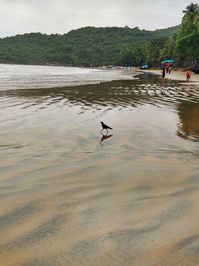 Bird Water Low