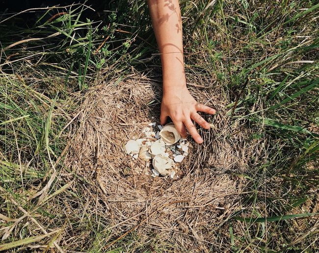 High Angle View Of Cropped Hand Holding Broken Eggs In Nest