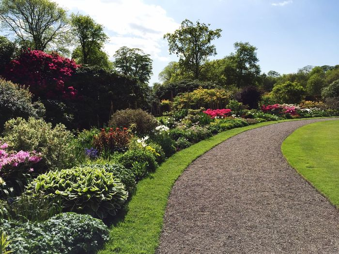 Flower Footpath Beauty In Nature Formal Garden