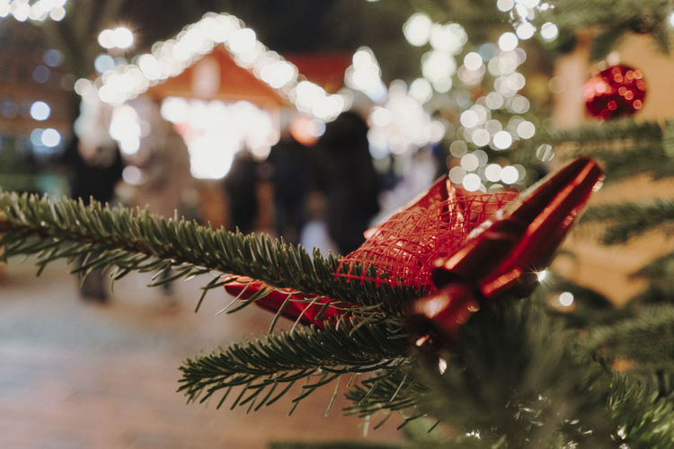 Christmas Market Germany Christmas Christmas Market Christmas Decoration Christmas Lights Holiday Celebration Tree Decoration christmas tree Christmas Ornament Close-up Focus On Foreground Plant Red Animal Selective Focus Nature No People One Animal Illuminated