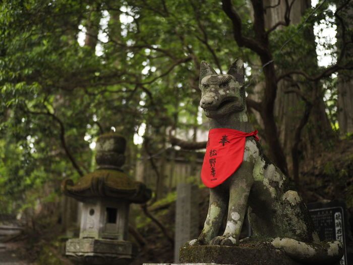 Wolf Taking Photos Taking Pictures Japanese Shrine Single Forcus Olympus Standard Lens