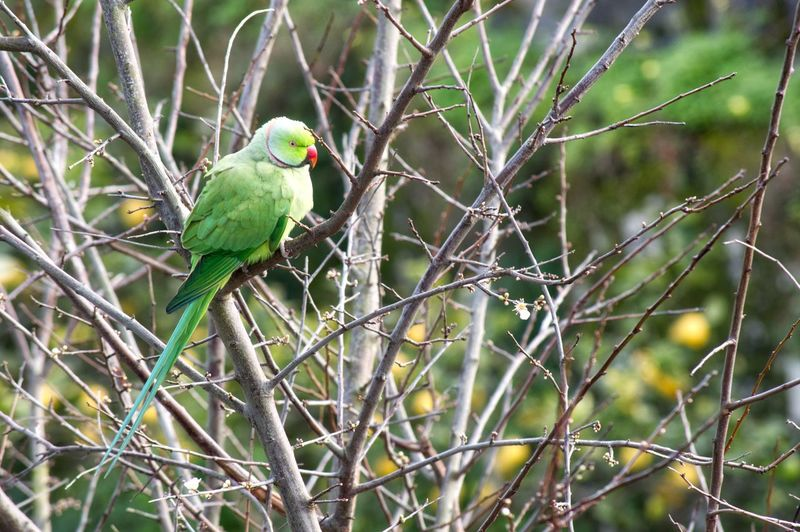Parrot perching on bare tree