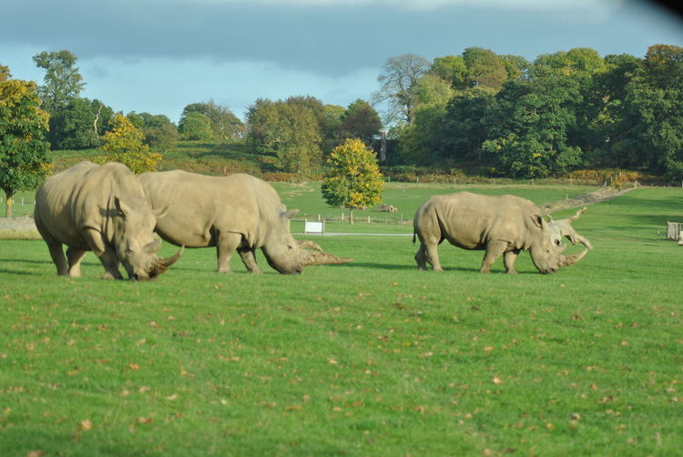 Safari park Nature Photography Wildlife Photography Rhino Rhinoceros Safari Park Large Animal Group Of Animals