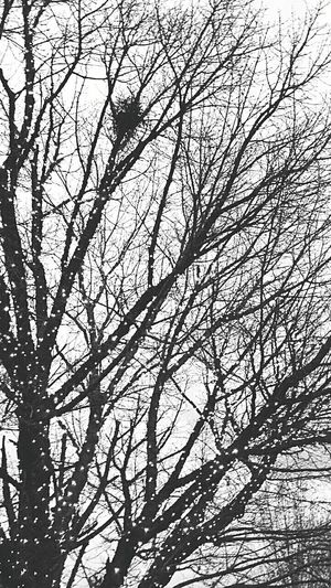 Low Angle View Bare Tree Tree Nature Backgrounds No People Branch Full Frame Day Outdoors Sky Beauty In Nature Close-up My Year My View