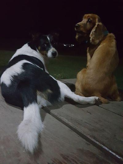 Friends Pet Dogs Charlas Perros  Infraganti Pets Dog Animal Themes Domestic Animals Mascotas Secretos