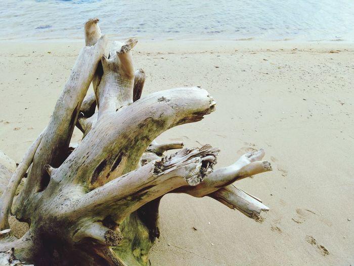 High angle view of animal skull on beach