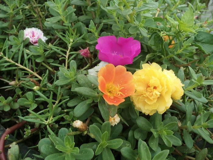 Scenery Shots Smell Like Earth Flower Japannese Magic Rose Green Color Garden Grassy Magic Garden