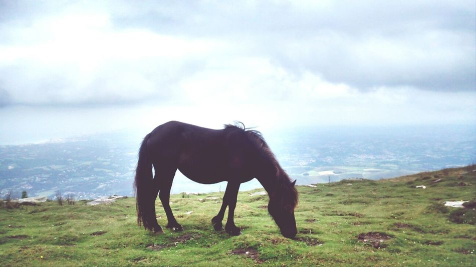 La Rhune, France Landscape Nature_collection Horses Pays Basque