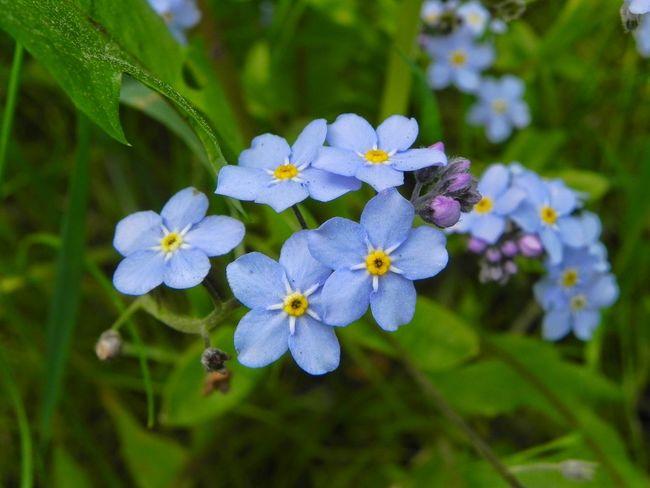 Flowers Nature Enjoying Life Enjoying Life