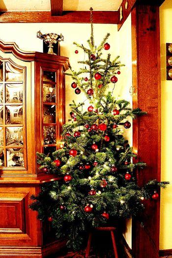 Christmas Tree Bernkastel Kues Bernkastel Family Heimat Homeland
