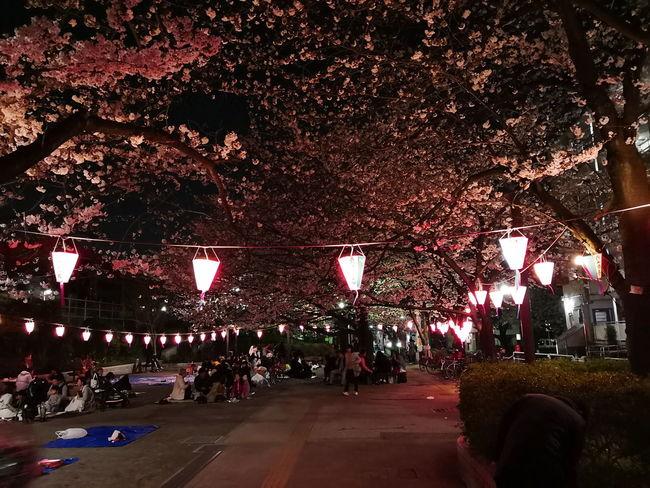Tree City Illuminated Sky