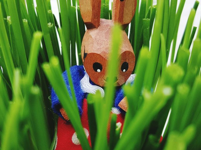 Easter Ready Easter Eastern Easter Bunny Osterhase In The Grass Im Gras Easterbunny Versteck Im Gras Ostersuchen