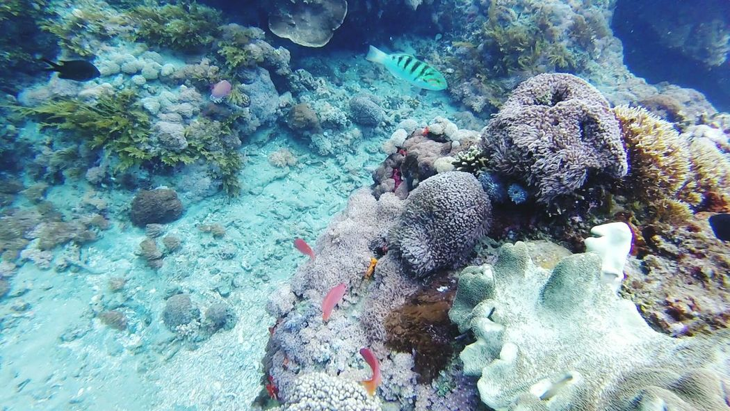 Underwater Photography Underwater Tulamben Coral Bay Freedive Landscapes With WhiteWall