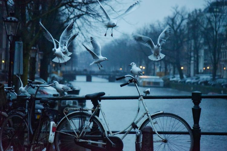 One for All and All for One Seagull Early Morning Bicycle Misty Morning Amsterdam Canal Amsterdamcity Malephotographerofthemonth Eye4photography  EyeEm Gallery Beauty In Nature Birds Bird Photography Wintertime Capture The Moment Lifeisbeautiful City Tree Winter Water Bicycle Cold Temperature Flying Architecture Rainy Season Weather Foggy