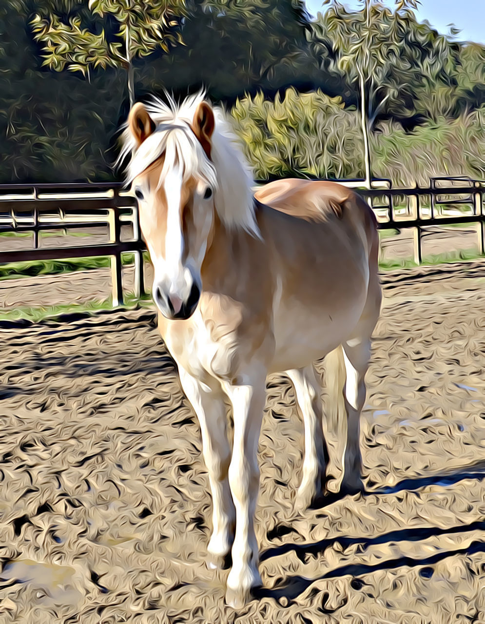 WHITE HORSE IN RANCH