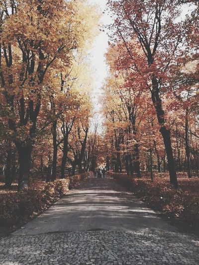 Autumn Colors Warsaw Poland