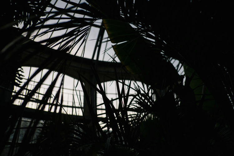 Hortus Botanicus Tree Plant Silhouette Low Angle View No People Nature Tropical Climate Growth Outdoors Day Architecture Built Structure Palm Tree Sky Branch Dark Forest Metal Beauty In Nature Tranquility Palm Leaf