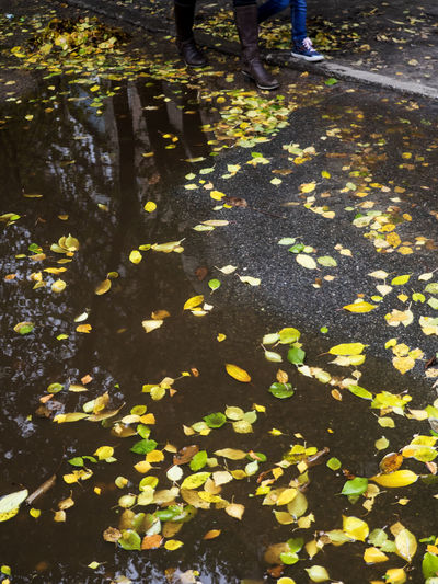 Fallen leaves float in a puddle on the asphalt, in the background are visible the legs of a woman and a girl who bypasses a puddle along the curb Asphalt ByPass Float Woman Abundance Adult Autumn Background Close-up Curb Day Fallen Fragility Girl Human Body Part Human Leg Leaf Leaves Legs Low Section Men Nature Outdoors People Puddle Real People Shadow Standing Water Wet