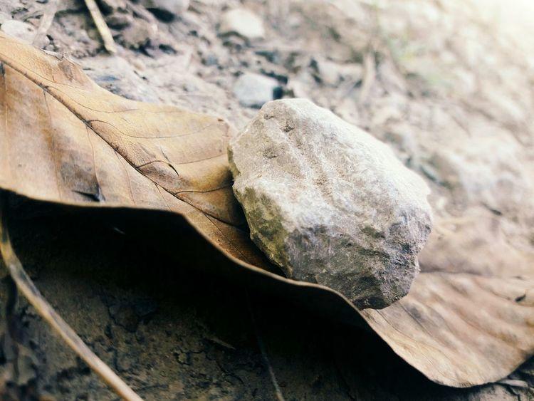 Stones N Rocks Leaves🌿 Nature