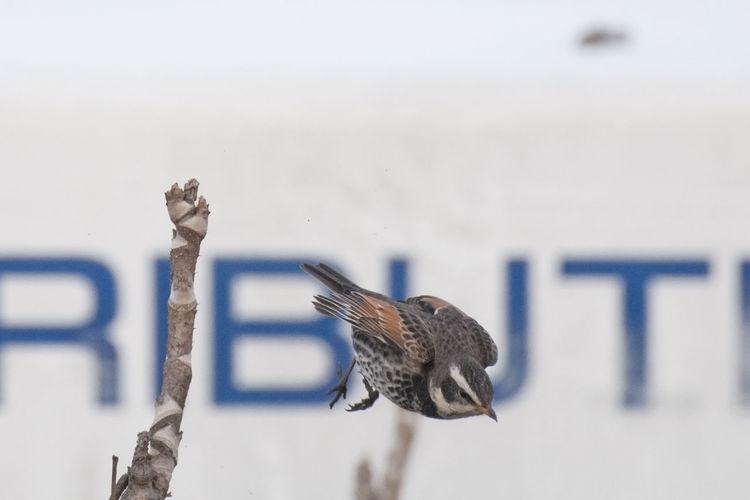 Close-up of bird on snow