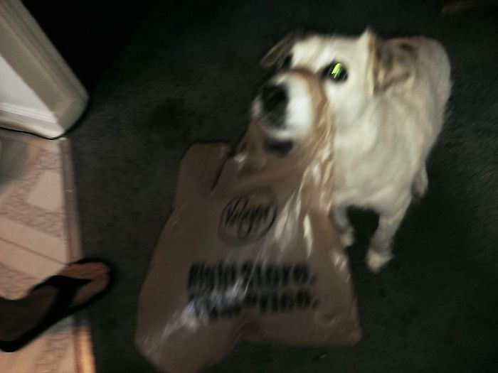 Pure Devotion Mr.Gus Whatsinthebagforme Pictureoftheday