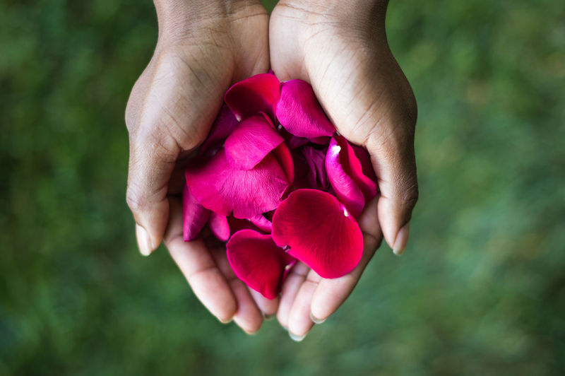 Rose pedals Beauty In Nature Close-up Finger Flower Flower Head Flowering Plant Focus On Foreground Fragility Freshness Hand Hands Cupped Holding Human Body Part Human Hand Inflorescence Nature One Person Outdoors Petal Pink Color Plant Purple Real People Vulnerability