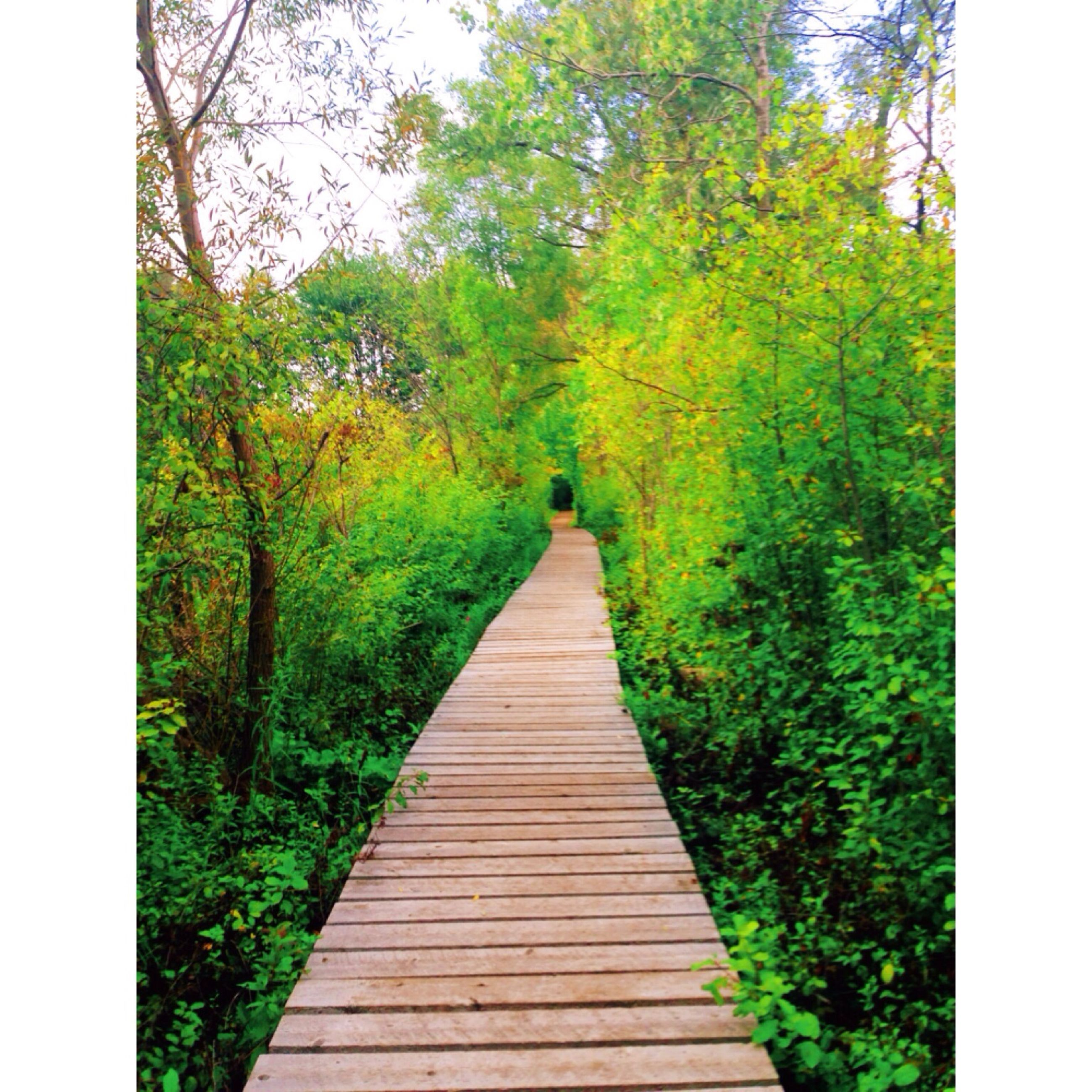tree, the way forward, tranquility, boardwalk, diminishing perspective, growth, wood - material, nature, tranquil scene, beauty in nature, footbridge, forest, green color, railing, narrow, vanishing point, scenics, branch, transfer print, wood