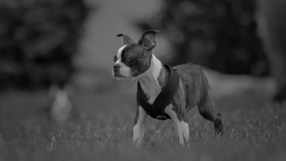 Animal Beauty In Nature Black And White Close-up Day Eyes Closed  Feeling Field Focus On Foreground Grass Grassy Mammal Monochrome Nature Nature No People Outdoors Pet Puppy Selective Focus Sunbathing Monochrome Photography The Portraitist - 2017 EyeEm Awards