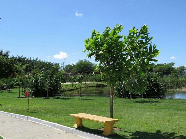 Relaxing Feira De Santana Parque Municipal Erivaldo Cerqueira Taking Photos