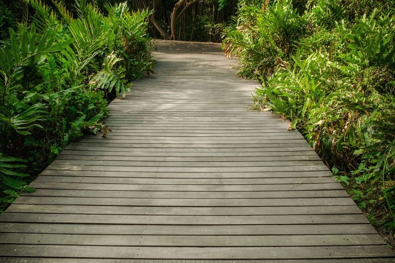 Old wooden floor along lush green plants in the tropical forest in summer.