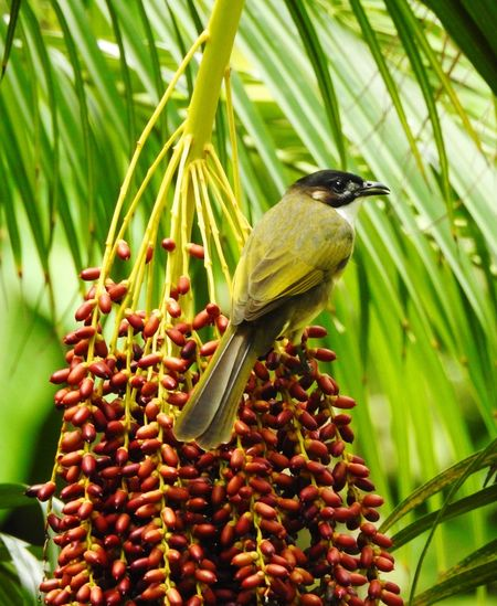 Bird perching on flower buds in forest