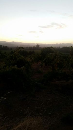 California vinyards Wine Country