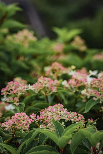 Plant Beauty In Nature Growth Plant Part Leaf Pink Color Flowering Plant Freshness Day Vulnerability  Nature Focus On Foreground Selective Focus Flower Green Color Outdoors Close-up Fragility Botany No People