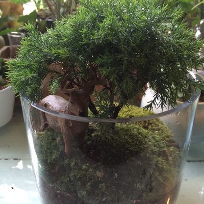 Plant EyeEm Nature Lover 🌿
