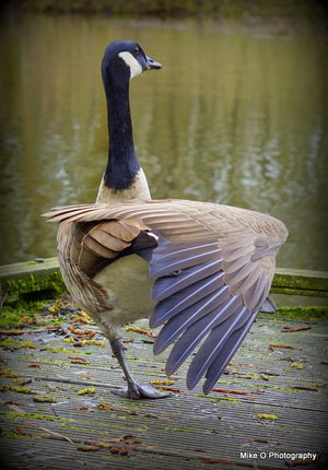Animal Themes Animal Wildlife Animals In The Wild Bird Close-up Day Lake Nature No People One Animal Outdoors Water