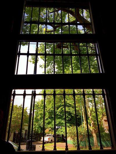 Window Glass - Material Indoors  Transparent Growth Plant Day Built Structure Window Frame Grid Low Angle View Architecture Grate No People Nature Tree Greenhouse Security Bar