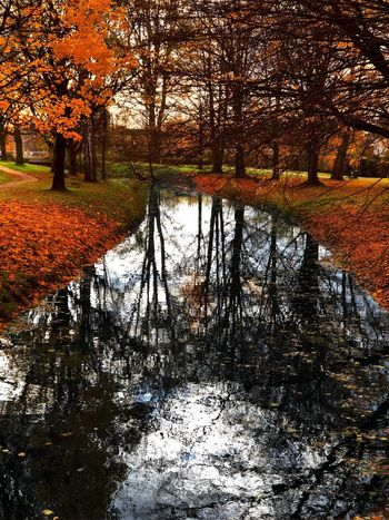 Autumn Tree Nature Change Reflection Beauty In Nature Leaf Water Tranquility Scenics Tranquil Scene Orange Color River Outdoors Park - Man Made Space No People Branch Day Forest Landscape