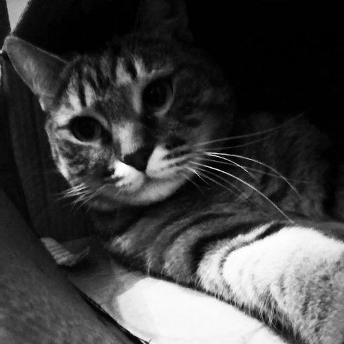 Cat Nice Funny Мотя
