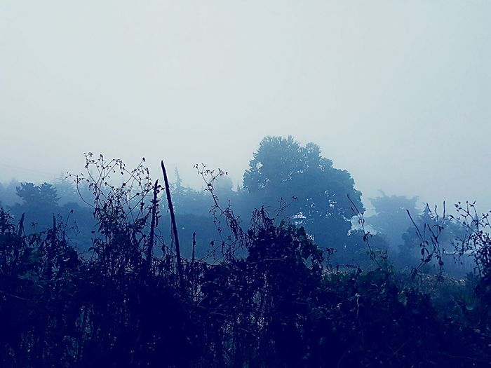 Nature Beauty In Nature Nature And Fog Foggy Day Foggy Morning Foggy Weather Foggy Landscape Foggy Sky Fog Foggy Foggy Kenya Kenya Iten, Kenya Iten