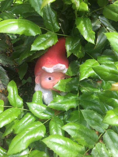Branch Close-up Dwarf Gartenzwerg Green Green Color Growth Leaf One Eyed Red Hat