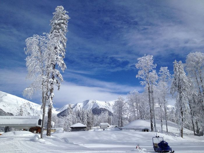 Cold and Silent Russian winter January Natural Beauty Natural Good Weather Sunny Day Resort Snowboarding Skiing Krasnaya Polyana Sochi Russia Ice Nature Snowy Blue Sky Cold Snow Winter Mountain Plant Ski Resort  Landscape No People Beauty In Nature Tranquil Scene