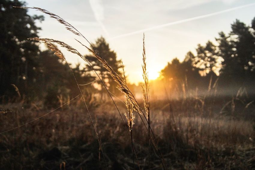 Plant while sunrise Wanderlust Sunrise Growth Nature Plant No People Field Tranquil Scene Beauty In Nature Tranquility Sunset Outdoors Focus On Foreground Day Scenics Close-up Landscape Rural Scene Sky Tree Grass