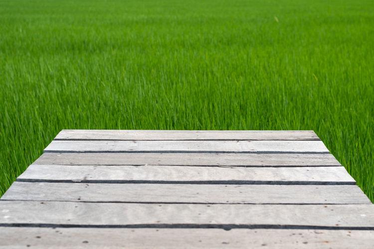 Boardwalk on field