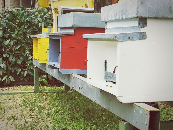 Honey bee Day No People Beehive Outdoors Box - Container APIculture Animal Themes Grass Nature Honey Bee Bees And Flowers APIculture Honeyhome