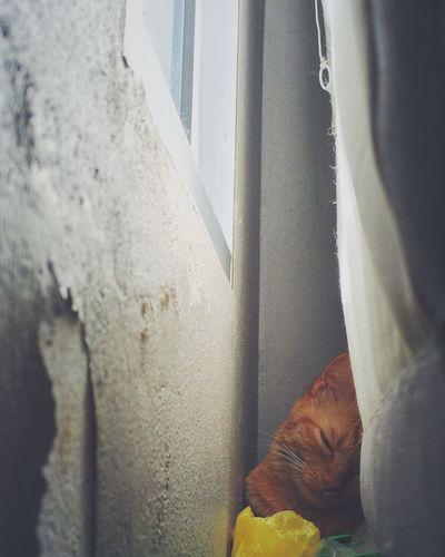 Caramel Cat Pet Favspot