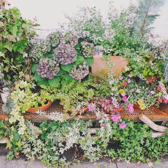 花 花のある暮らし Garden Photography Gardening