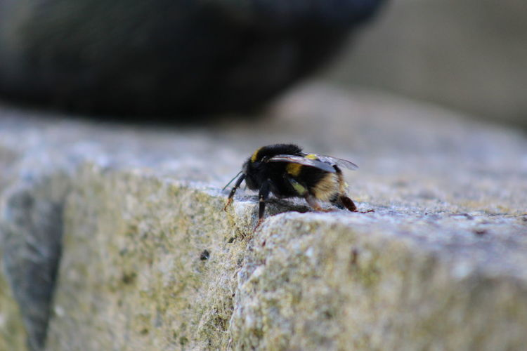 Close-up of bee on wood